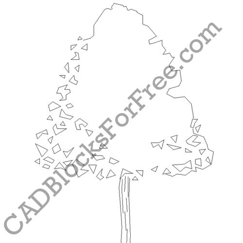 Deciduous Tree
