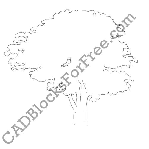 Whitebeam Tree