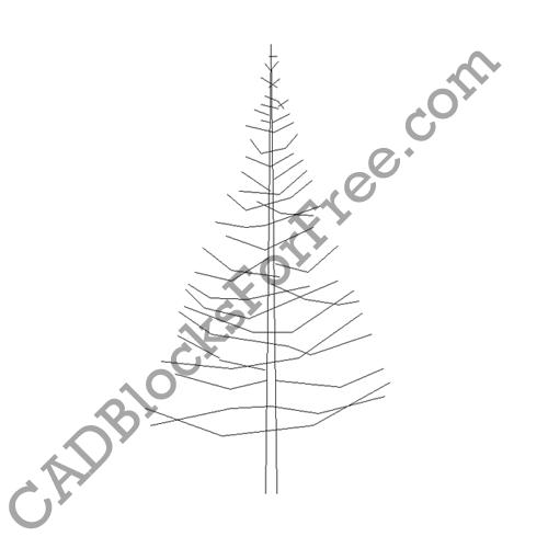Evergreen Tree