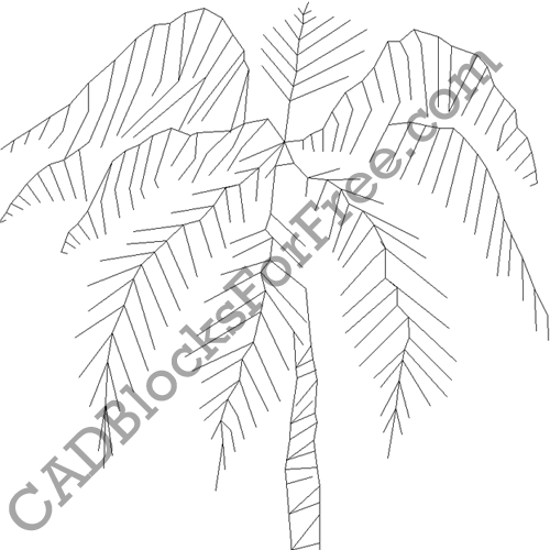 Palm Leaf Plant